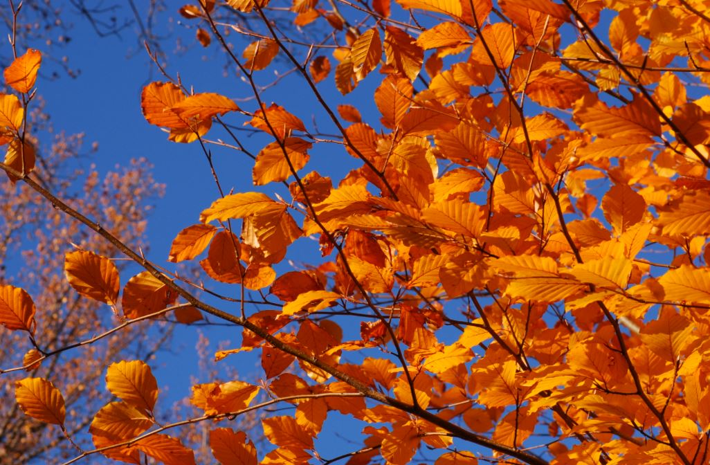 Carry on up the Autumn